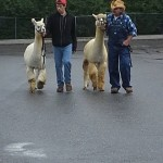 Alpacas & Geographically Desirable(2)