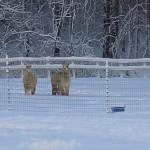 Winter 2013 (2)